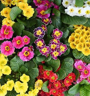 꽃집의 봄소식