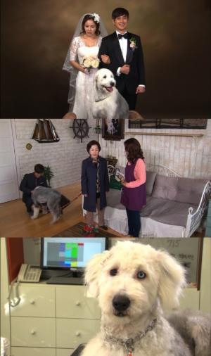 '사랑과 전쟁2' 최영완, 촬영 도중 개에게 물려..큰 부상 아냐