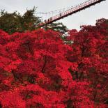 [레저] 고추장보다 붉은 유혹, 순창의 가을