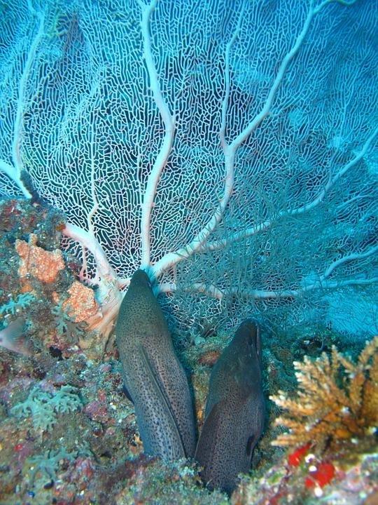 아마존서 최고 전압 860볼트 가할 수 있는 전기뱀장어 발견