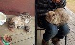 산불 피해 달아난 호주 고양이, 일주일 만에 무사 귀환.. '기적'