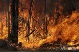 """""""호주 산불, 우리 경제에도 영향…육류·양모·와인 수입 차질 빚을 것"""""""