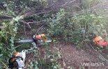 청주 야산서 벌목하던 60대 나무에 깔려 숨져
