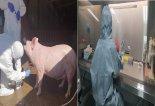 아프리카돼지열병 대응 강원권 협의체 구성