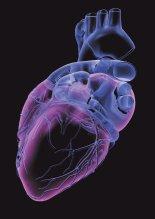 근육조절 단백질이 혈압조절 센서였다
