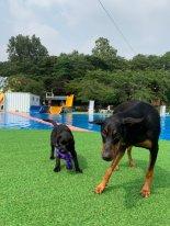 서울 도심에 강아지 수영장 도그베이838 오픈