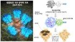 빛나는 단백질이 암세포만 골라 죽인다