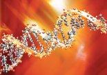 유전자 가위로 DNA 실시간 관찰