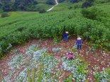 서천군,1500년 한산모시농업 국가농업유산지정 도전