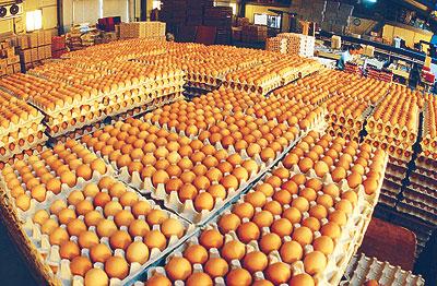 국내산 계란에서도 살충제 성분 검출…15일부터 모든 농장 계란 출하 중지