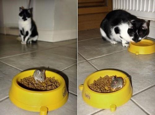 생쥐에 밥 뺏긴 고양이 등장 '톰과 제리' 실사판 등장