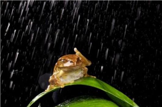 """망연자실 개구리 포착, """"비는 오는데 우산은 없고.. 짜증나네"""""""