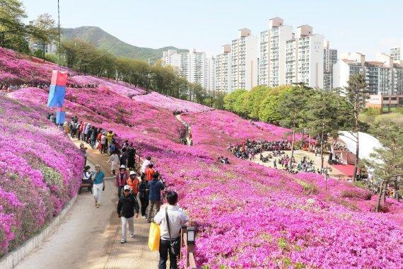 군포철쭉축제 전국명소 도약, '순항 중'