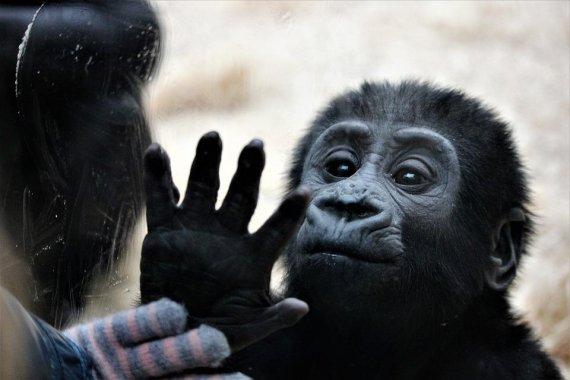 동물원에서 사라진 희귀 원숭이