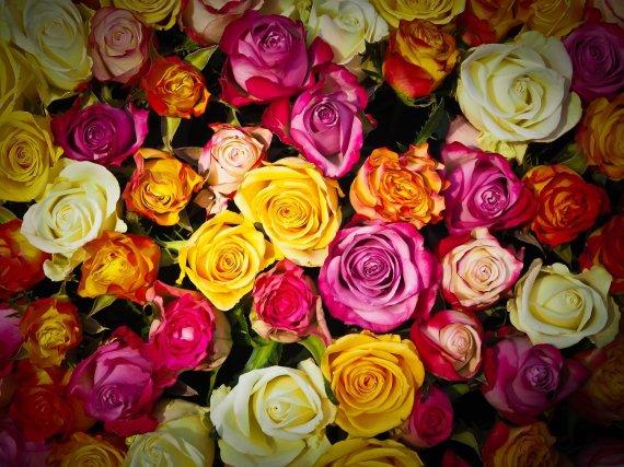 전교생에게 꽃 선물한 소년들