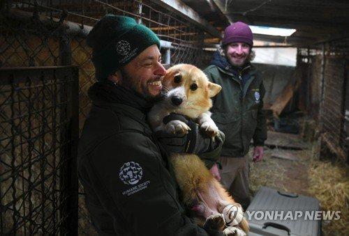 농장에서 구조된 64마리 개의 새로운 운명