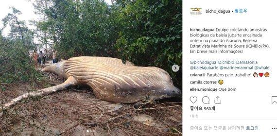 정글에서 발견된 혹등고래, 어떻게?