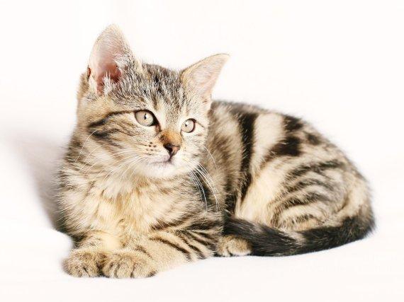 고양이 쌍꺼풀 수술 시킨 여성의 황당한 변명