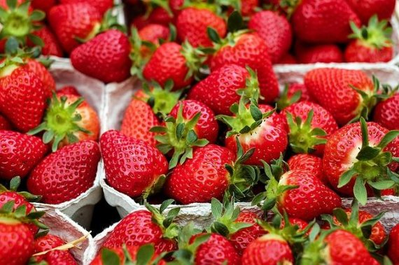 딸기 매일 먹으면 몸에 나타나는 놀라운 변화