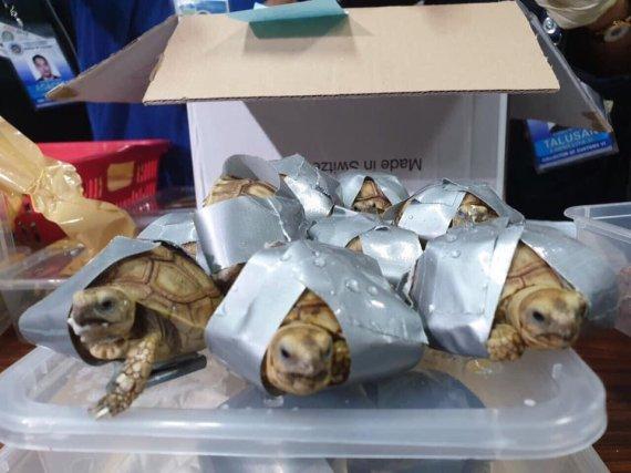 테이프에 감긴 거북이 1500마리