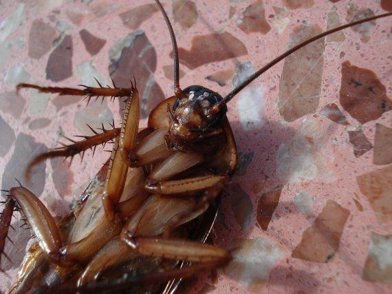 '바퀴벌레 소굴' 아파트서 발견된 5세 소녀