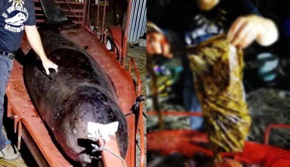 고래 뱃속에서 발견된 쓰레기 40kg