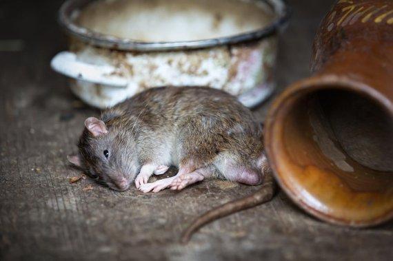 죽은 쥐 뱃속에서 발견된 물건들