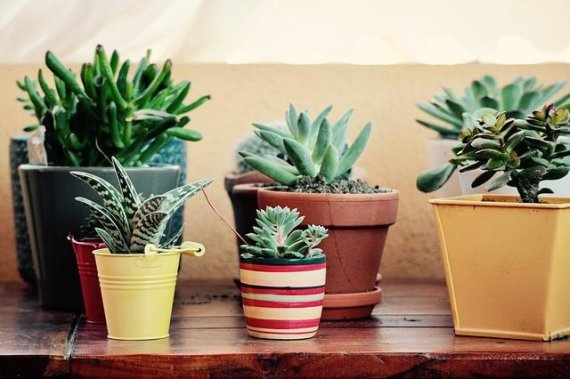 미세먼지 줄여주는 5가지 식물