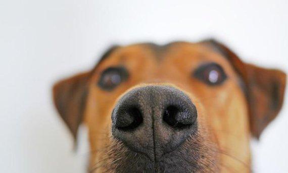 냄새로 주인 발작 징후 알아내는 개
