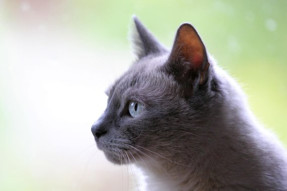 집나가 사라진 고양이, 10년만에 가족 품으로 돌아왔다
