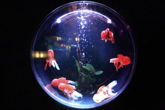 어항에 물고기 방치한 남성, 동물학대로 낸 보석금은?
