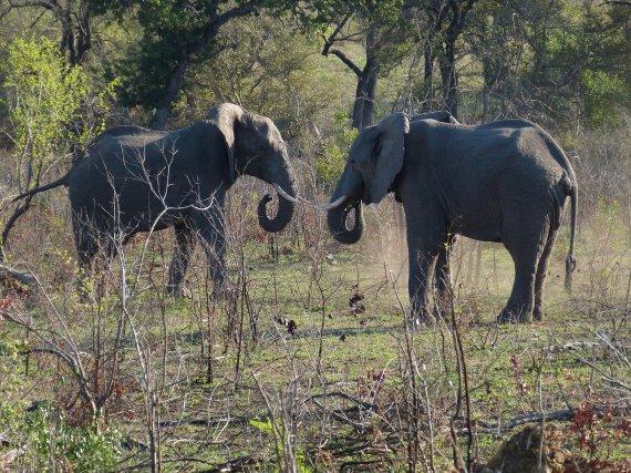 코뿔소 잡으려.. 밀렵꾼의 무모한 도전