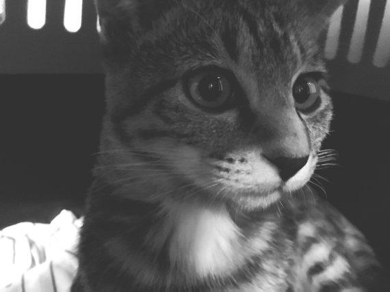 고양이, 자신의 이름 알아 듣는다