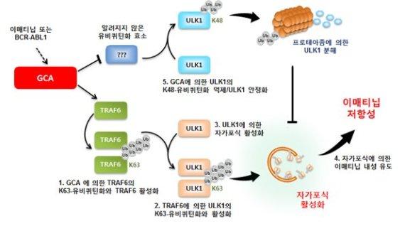 김동욱 교수팀, 기적의 항암제 '글리벡' 내성 비밀 풀어