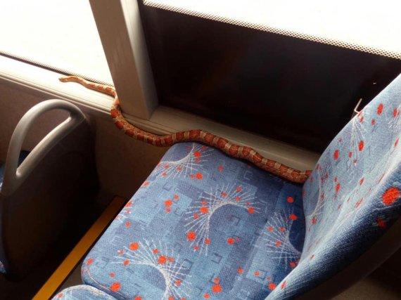 버스 좌석에서 발견된 뱀에 승객들 '경악'.. 끝내 잡은 사람은?
