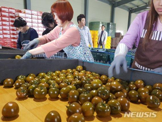 50억 넘는 판매량.. 쿠마토의 정체는? 비타민C가 무려