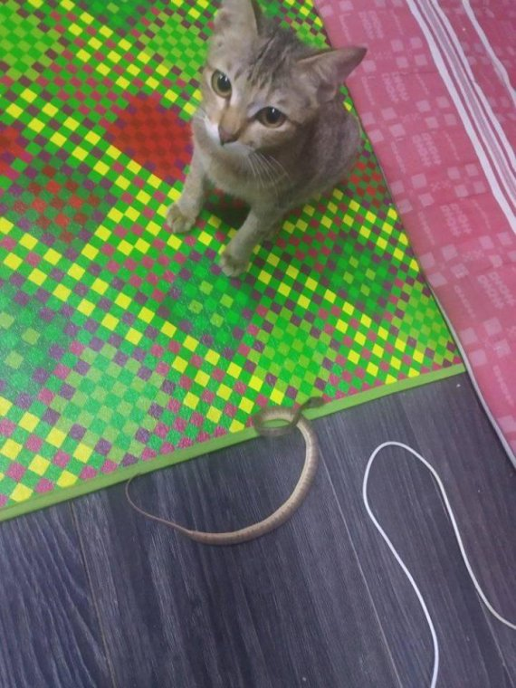 이어폰 고장냈다고 혼냈더니.. '실뱀' 물고온 아기고양이