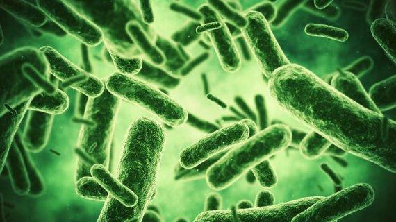항생제로 못잡는 슈퍼박테리아 해법, 부엌 수세미에서 찾았다