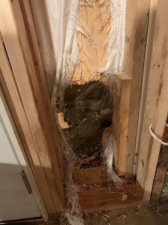 한밤중 집에 들이닥친 '흑곰', 경찰 출동하자 벽 뚫고 탈출