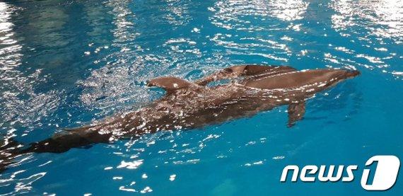 울산 남구 고래생태체험관서 '새끼 돌고래' 탄생