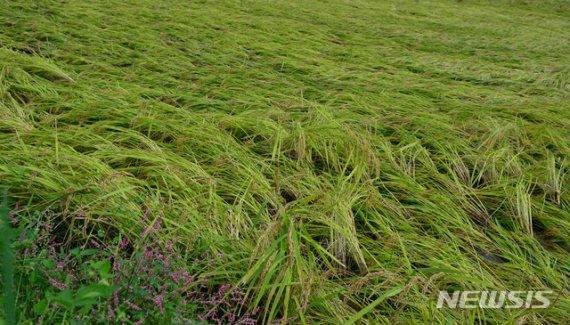정부, 연이은 태풍으로 피해 본 농가 벼 2만여t 매입
