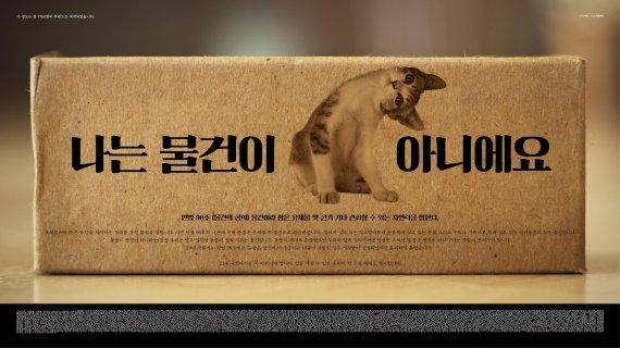 '캣맘' 김하연 작가, 두번째 길고양이 사진전 연다