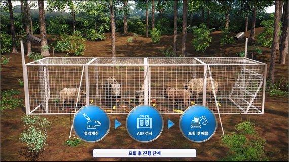 아프리카돼지열병 옮기는 멧돼지 포획 성공