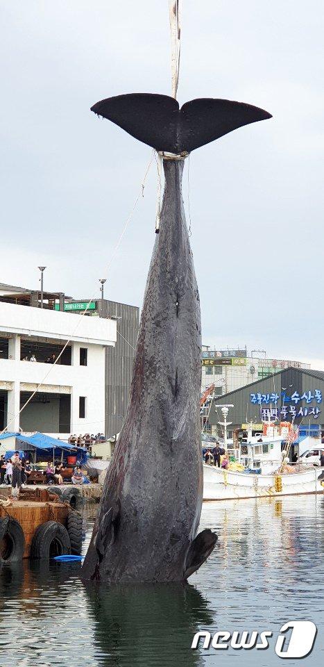 속초 대포 앞바다서 길이 13m 신비의 동물 발견