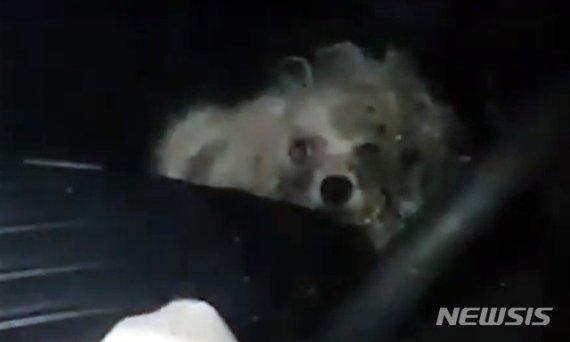 차 안에서 1년 이상 길러진 강아지, 견주의 정체는..