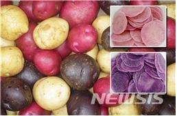 '땅속의 사과' 감자 놀라운 효능, 먹으면 피부가..