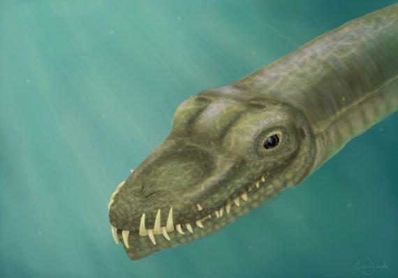 '공룡계의 기린' 타니스트로페우스는 물에서 살았다