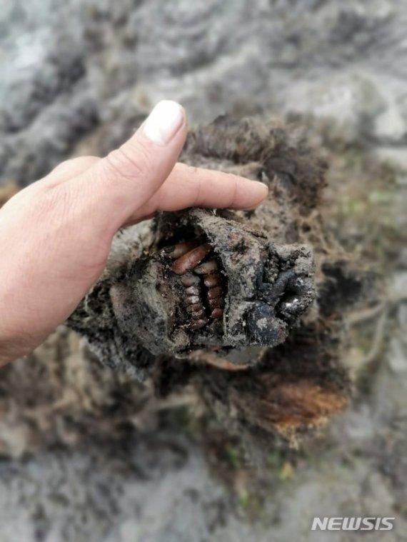 러시아서 빙하시대 미라 발견됐는데.. 4만여년 전 동물로..