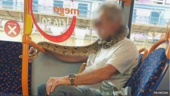 英남성, 마스크 대신 뱀으로 얼굴 가리고 버스 탑승
