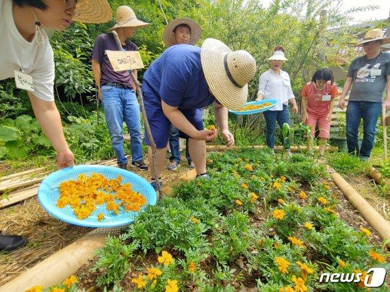 치유농업활동, 치매 예방에 '효과'